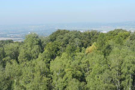 Widok na Las Wolski z kopca Piłsudskiego
